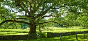 The Bedford Oak, Rte 22 CT